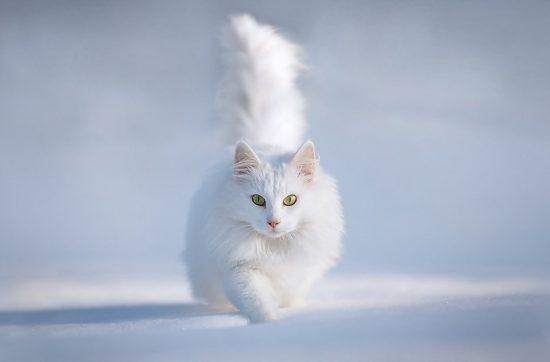 the soul of a cat
